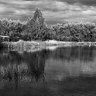 Wetlands birdhouse by Joel McDonald
