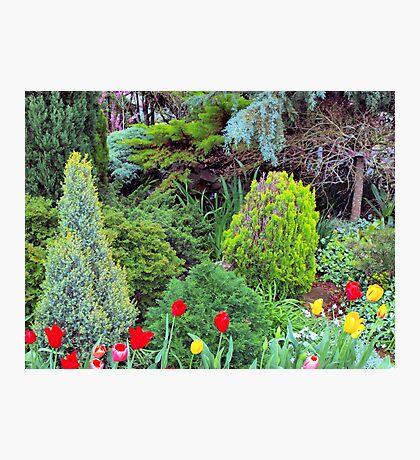 Toowoomba Gardens Photographic Print