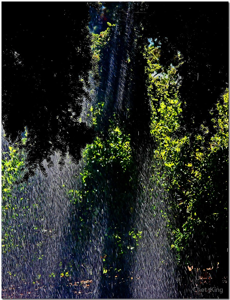Rain Forest by Chet  King