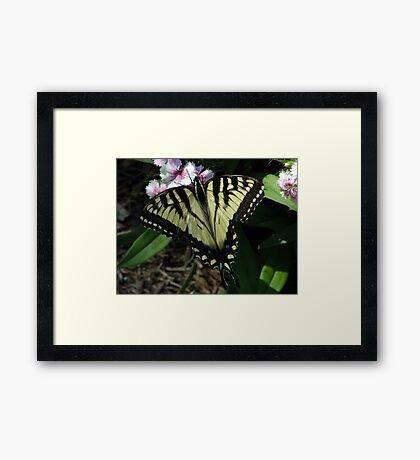My Flutterby, My Friend Framed Print