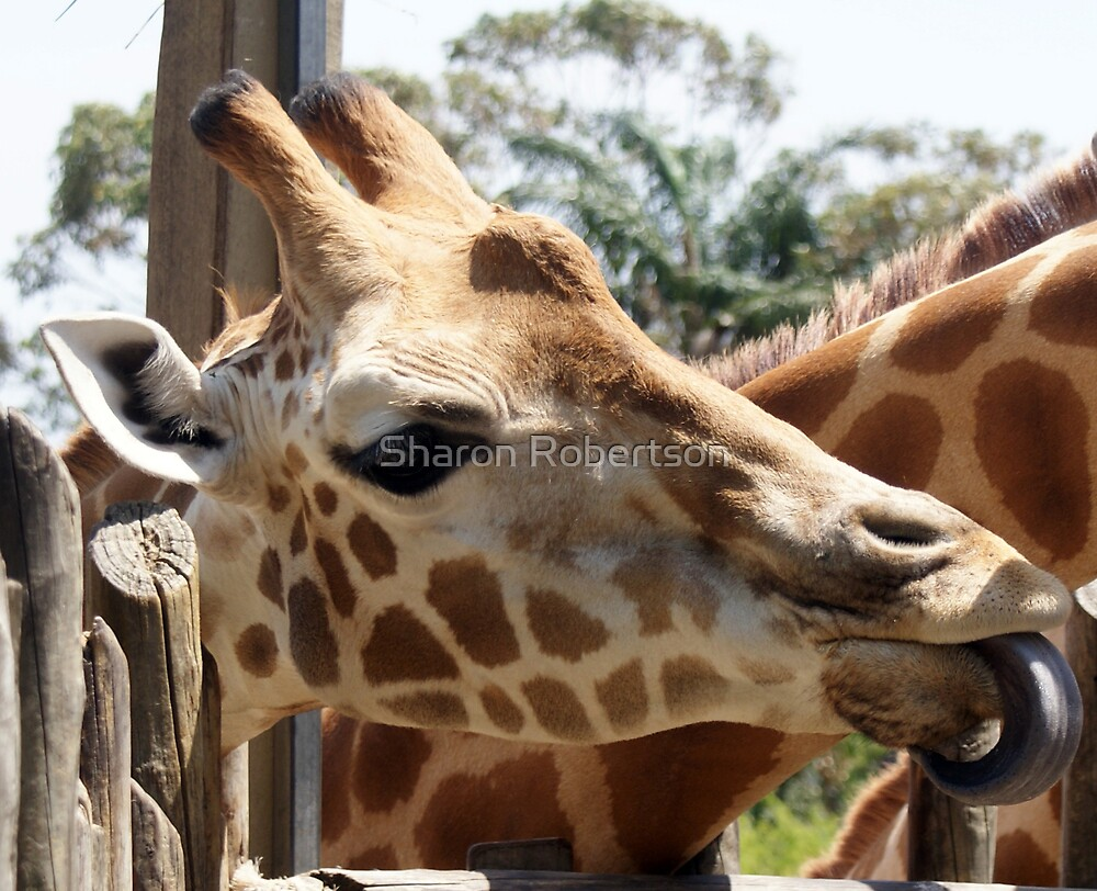 Give me some! by Sharon Robertson