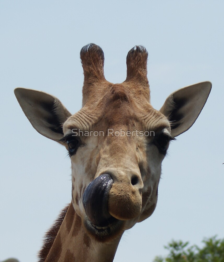 Is there something up my nose? by Sharon Robertson