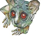 Bushbaby by Cantus