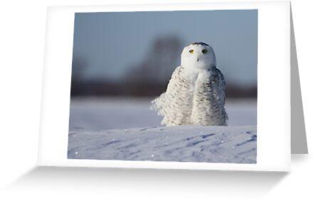 Heiliges Snowy von Heather King