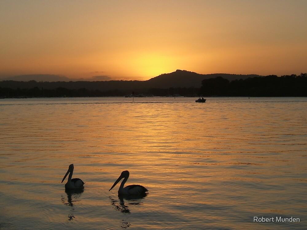 Golden pelicans by Robert Munden