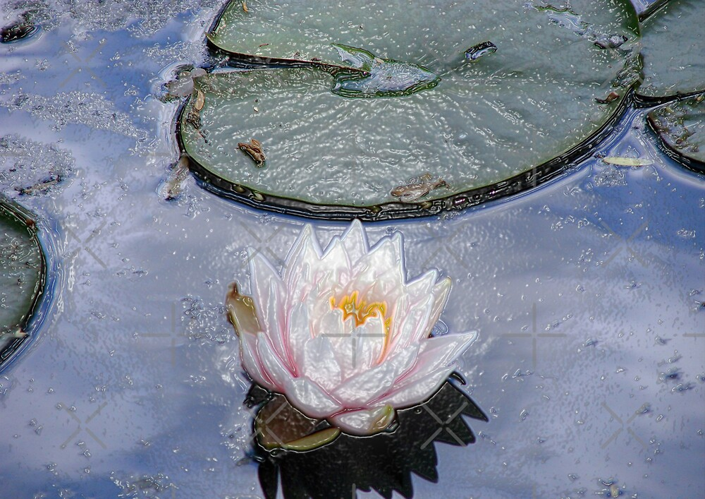 Lily Pond  by Kimberly Miller