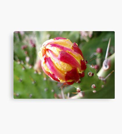 Cactus, the flower bud Canvas Print