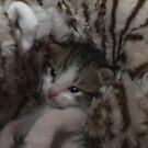 Freddie 4 weeks later by redqueenself