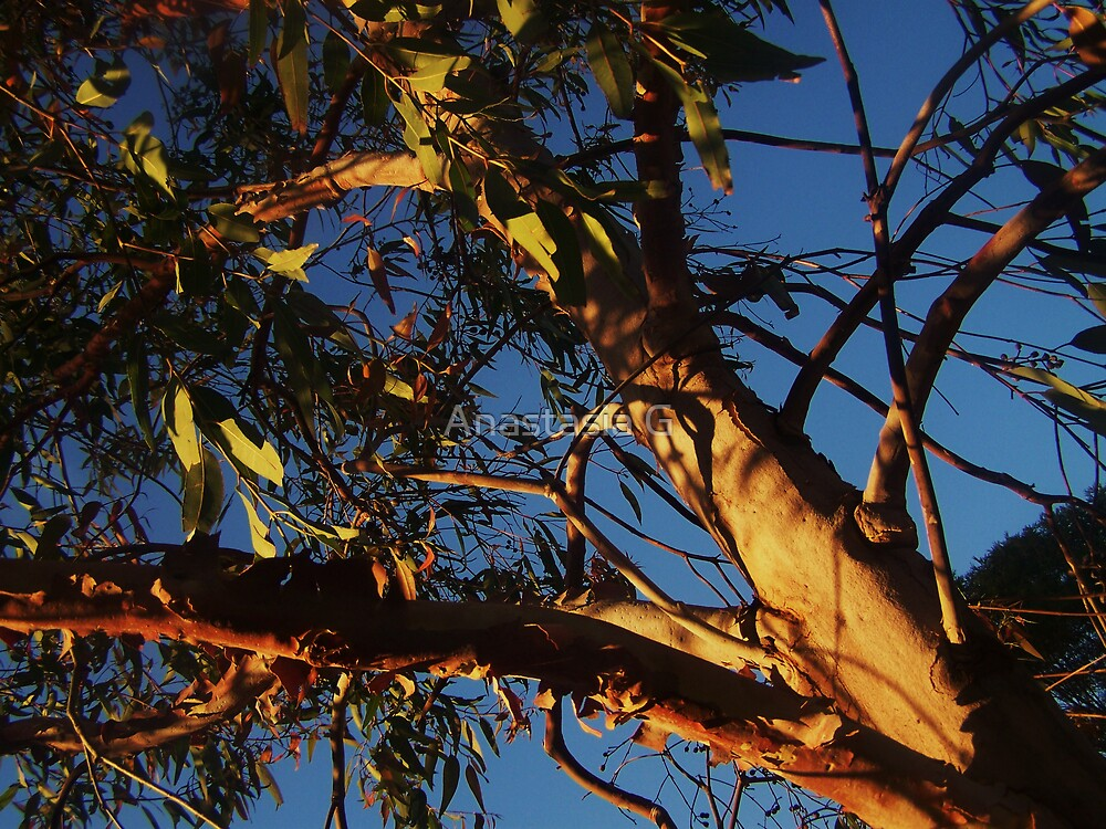 In the Gum tree by Anastasia G