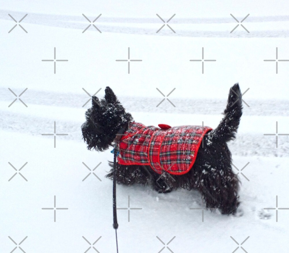 Jack in the Snow by Beth A.  Richardson