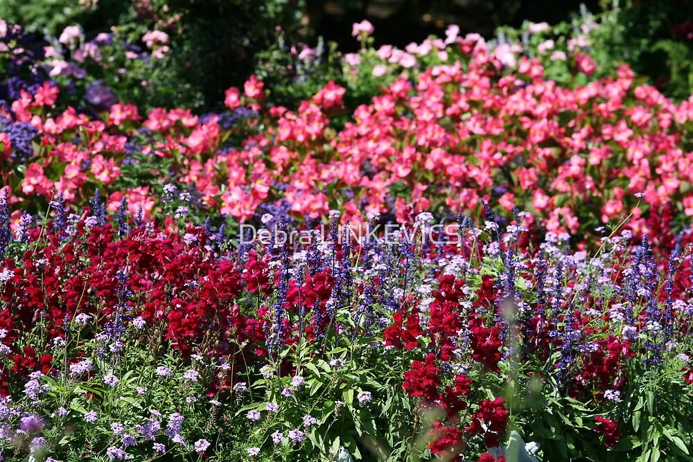 Colourful by Debra LINKEVICS