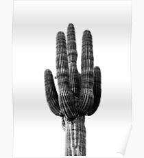 Huge black and white cactus Poster