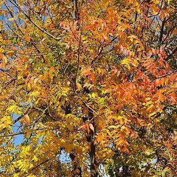 Autumn in Adelaide by warriorprincess