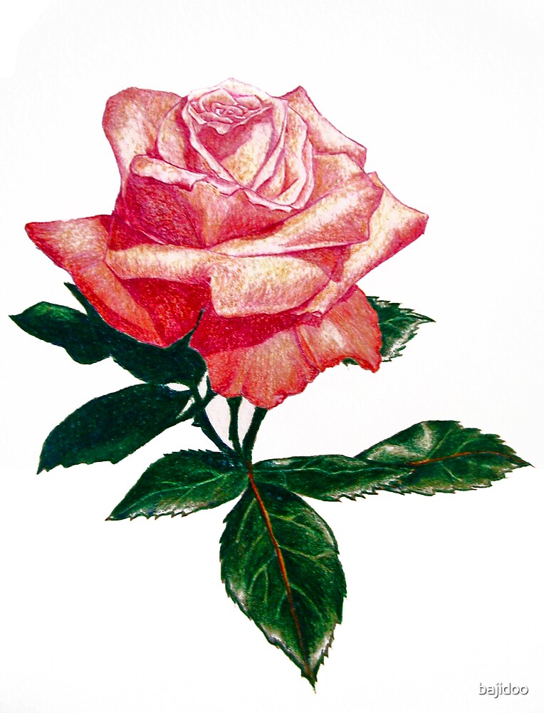 Pink Rose by bajidoo
