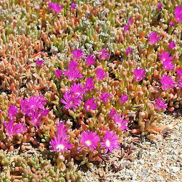 Flowers Hines Hill WA by warriorprincess
