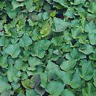 Katunga Leaves by Kim Jackman