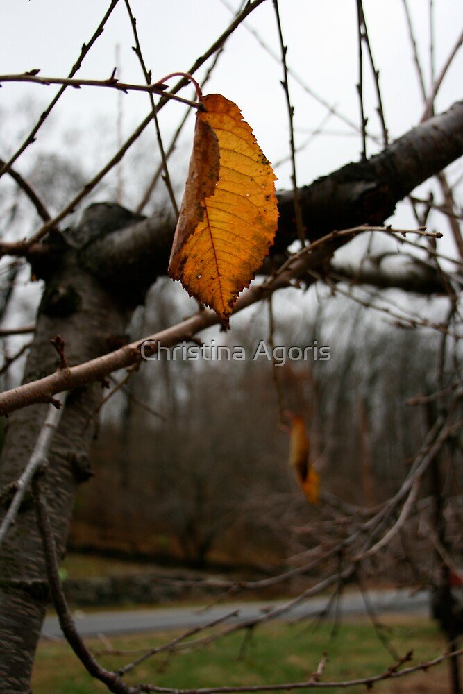Last leaves of Fall by Christina Agoris