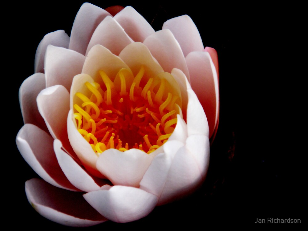 Awakening Beauty by Jan Richardson