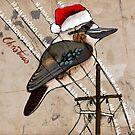 Kookaburra Christmas card by Michele Meister