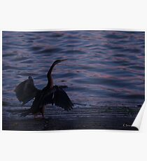 Dance Of  The Waterbird Poster