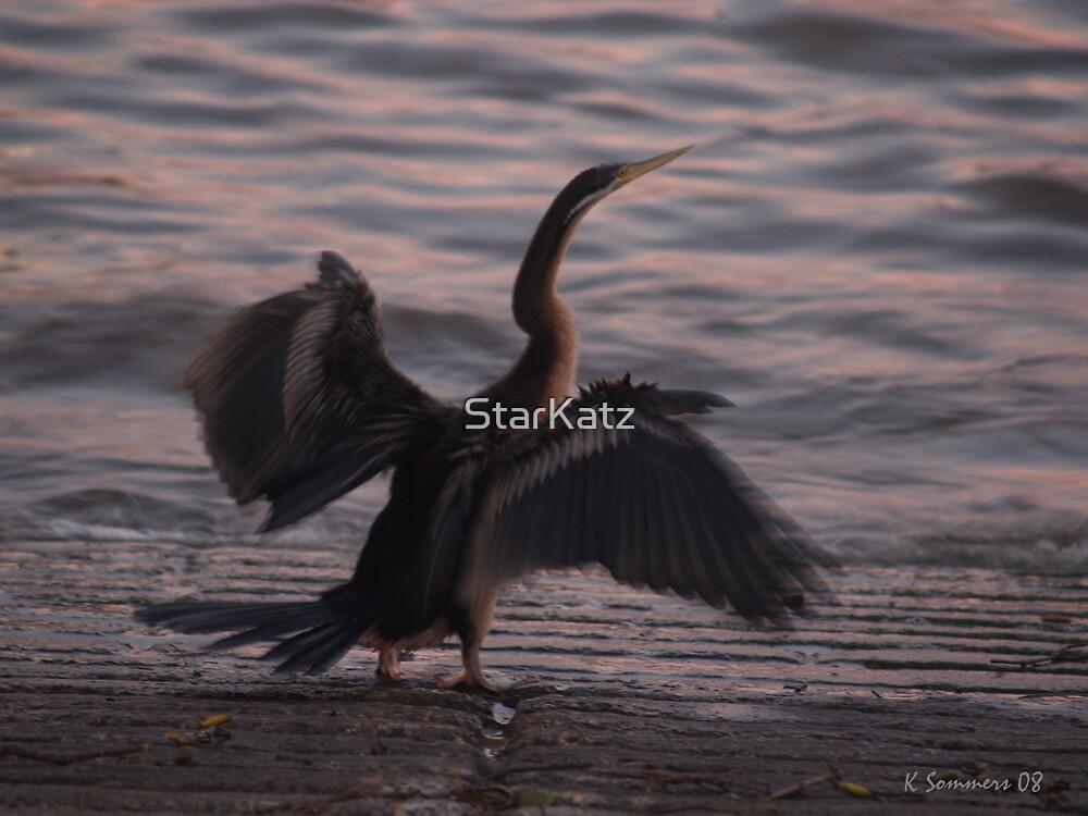 The Wings by StarKatz