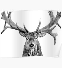 Red Deer - On White Poster