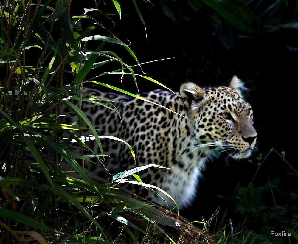 Wild Spots - Leopard (Panthera Pardus)  by ©FoxfireGallery / FloorOne Photography