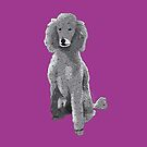 Poodle by Louisa Houchen