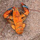 Orange Lobster by AnnDixon