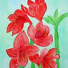Amaryllis by Charisse Colbert