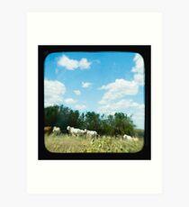 Brahman Cattle Art Print