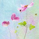 Anemones Dancing  by DIANE  FIFIELD