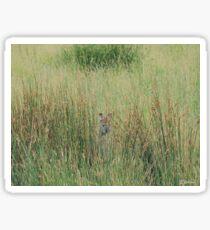 Kangaroo playing hide and seek Sticker
