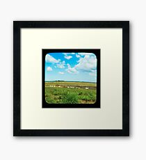 Cattle Walk the Line Framed Print