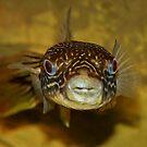 Puffer Fish ?? by AnnDixon