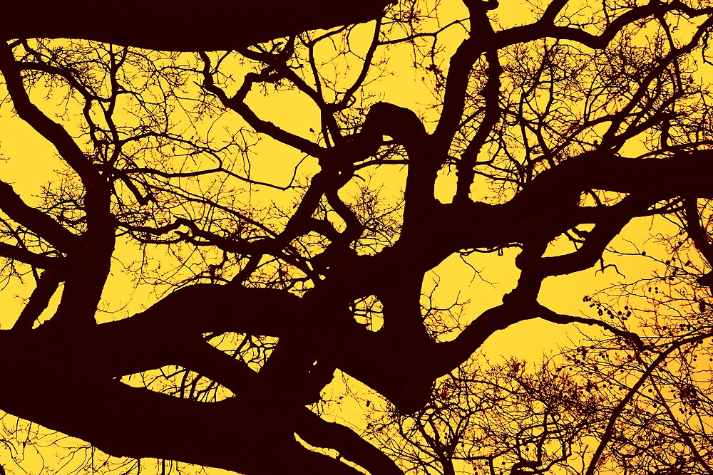 Tinted branches by natureshues