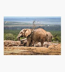 Elephants II Photographic Print
