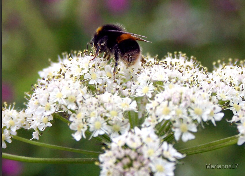 Busy bee by Marianne17