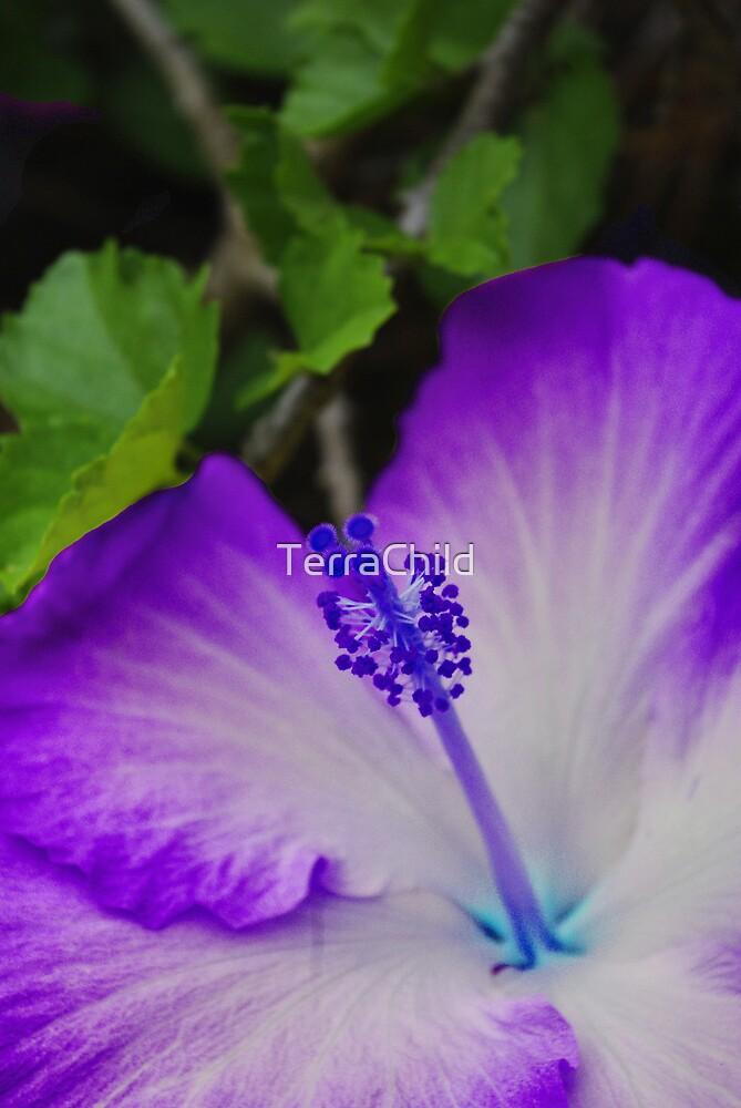 Purple Petal  by TerraChild