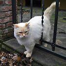Fluffy Kitty by Kallian