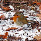 Robin by Kallian
