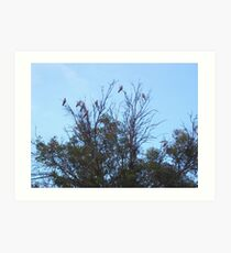 Galah Tree Art Print