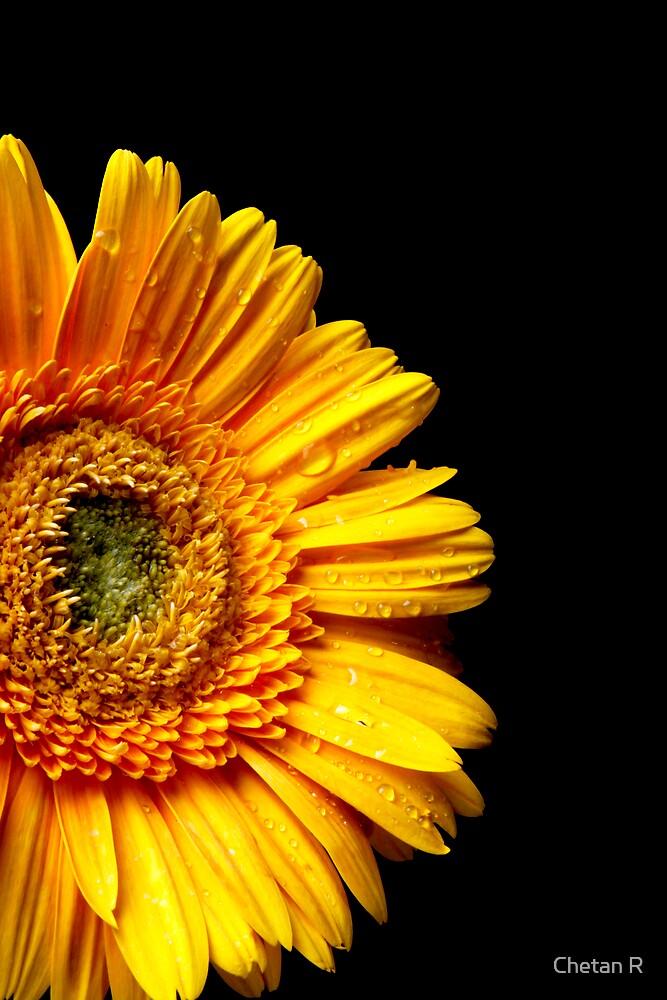 Flower by Chetan R