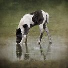 Reflective Moment by Carol Bleasdale