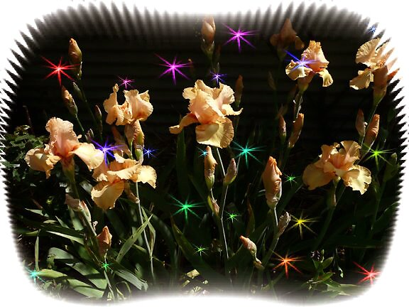 Dance of the iris Fairies... by Julia Mainwaring-Berry