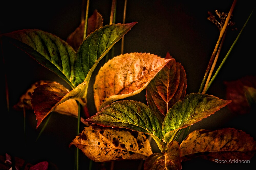 Autumn leaves by Rose Atkinson