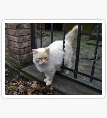 Fluffy Kitty Sticker