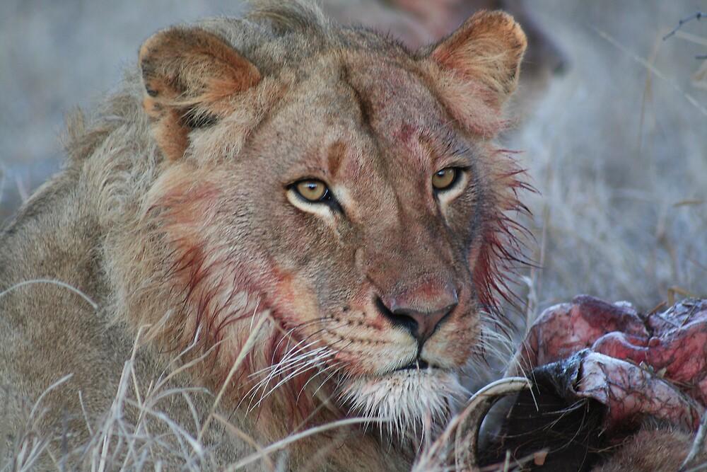 Lion - Kruger National Park, South Africa, July 2008 by Sarah Doornbusch