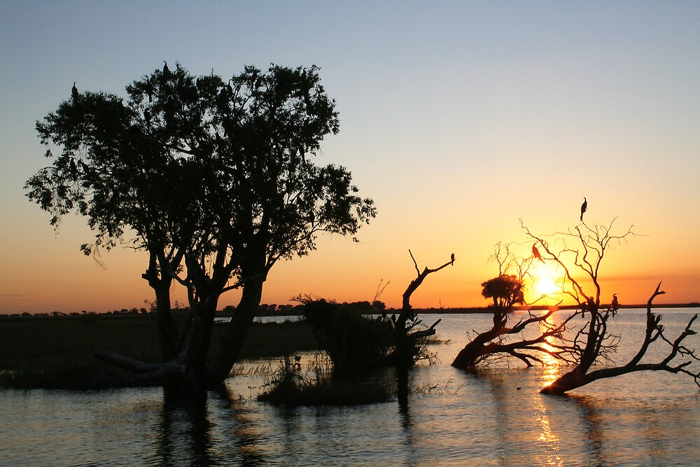 Chobe River - Chobe National Park, Botswana, July 2008 by Sarah Doornbusch