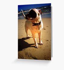 Diesel Frey-Orpheus Malachi at the beach Greeting Card